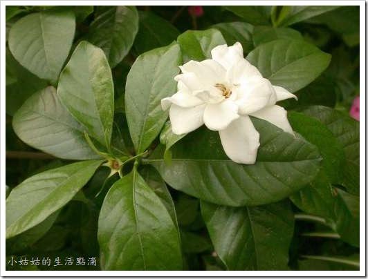 plant_93-c3-102-CYS1605