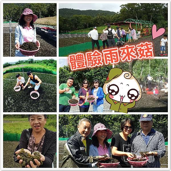 雨來菇農場體驗