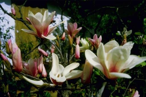 14200花卉.jpg