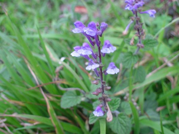 小紫花-2