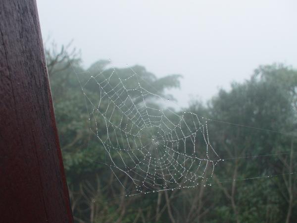 夏綠蒂的網