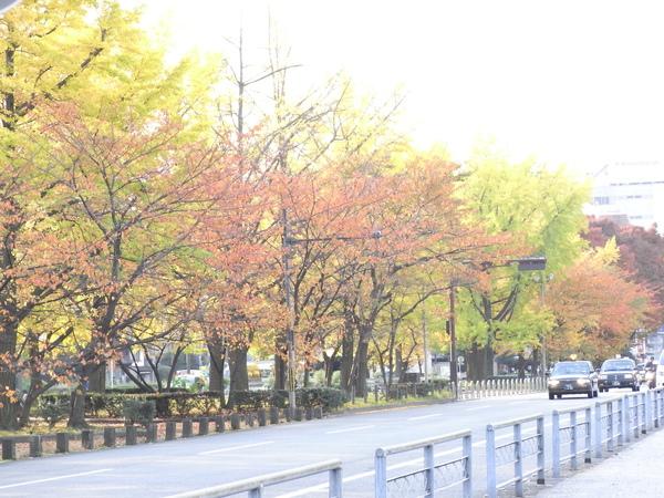1118-01京都烏丸通り.JPG