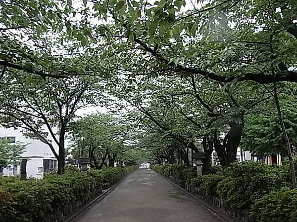 0511鎌倉鶴岡八幡宮表参道.JPG