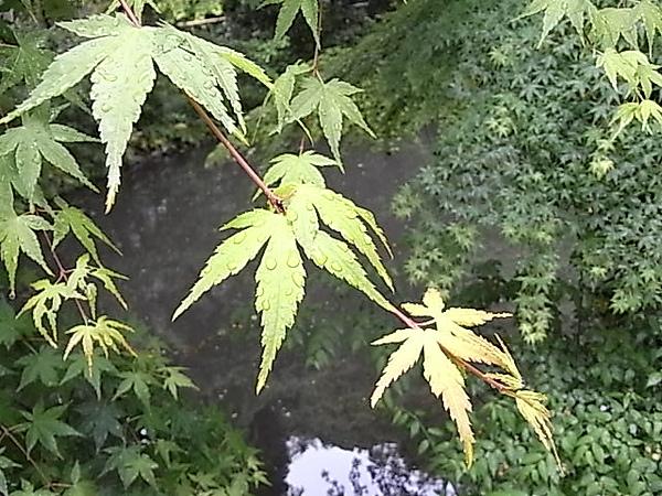 0511鎌倉鶴岡八幡宮庭.JPG