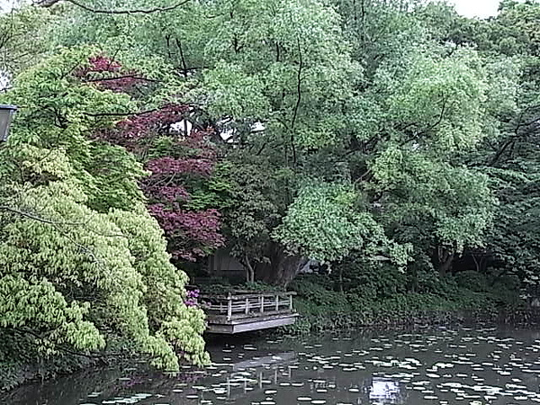 0511鎌倉鶴岡八幡宮源平池.JPG