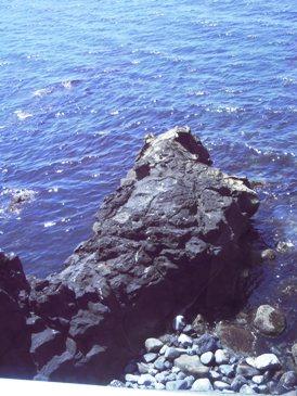 0514利尻島巡りー寝熊の岩.JPG