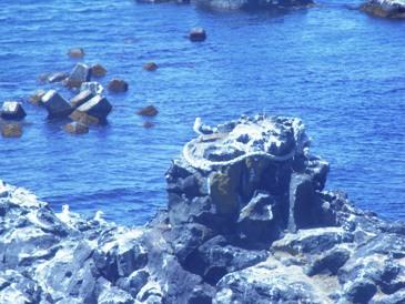 0514利尻島巡りー人面岩.JPG