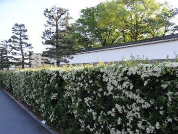0516京都・二条城外.JPG