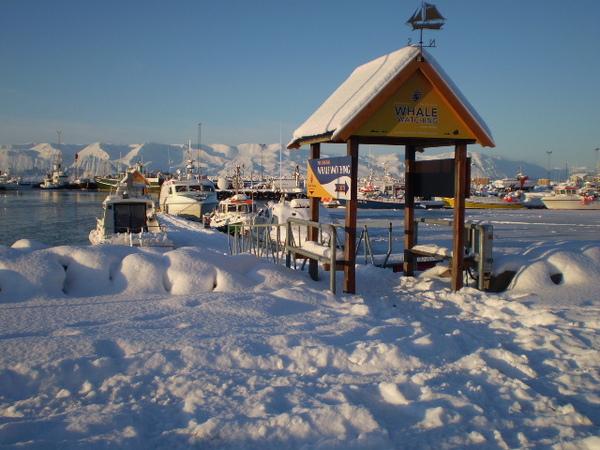 冰島的冬天