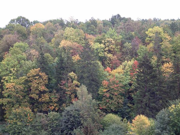入秋的森林顏色繽紛