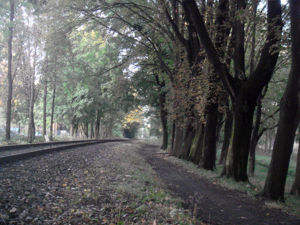 Kutná Hora鐵道旁的林蔭步道