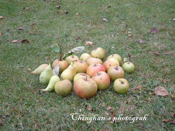 成果呈現,水棃+蘋果