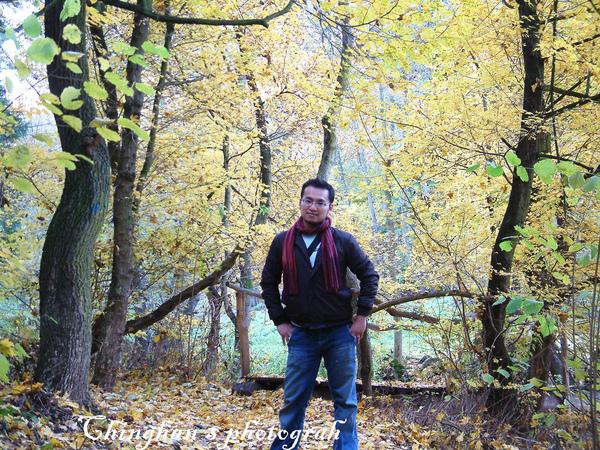 金黄色的山林
