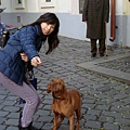 友善的狗,很聴話。雖聴不懂中文,卻知道我叫牠看鏡頭