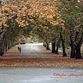 Varosliget(City Park)市民公園