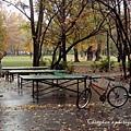 在市民公園打戶外桌球