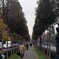隨手拍拍可愛的行道樹