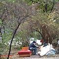 """到處都見得到遊民,但這個比較厲害,搬了兩張床墊放在樹下就是睡覺的地方。""""樹還有拱門的型狀"""""""