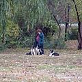 主人很忙與三隻邊境牧羊犬,姿勢擺得好好的不離開主人,真是乖的不得了。