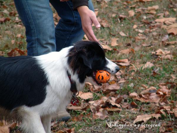 這隻只想玩球,找人丟球玩。