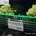 長的奇怪的不知名蔬菜