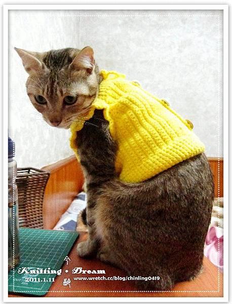 momo 黃色背心