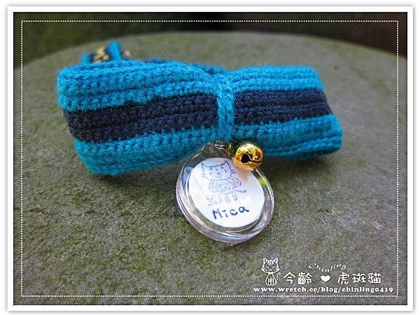 虎斑貓mica的藍色蝴蝶結項圈