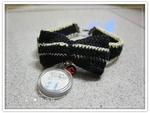 虎斑貓念善的黑色蝴蝶結項圈