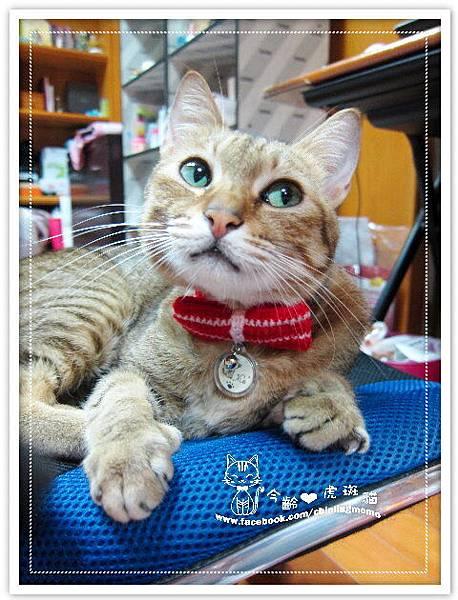 紅色條紋蝴蝶結.貓項圈