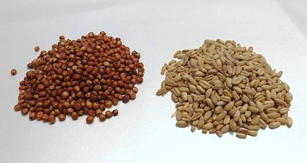 高粱與小麥.jpg