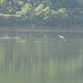 水鳥3.JPG