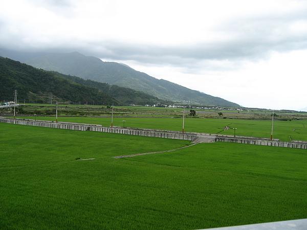 花東縱谷的田野.JPG