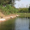 護城河旁的黑天鵝1.JPG