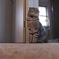 阿比很漂亮的坐姿