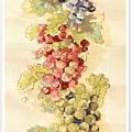 葡萄成熟時14.jpg