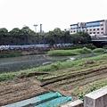 20130924竹北路拍-032.JPG