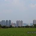 20130929橋下道路-013.JPG