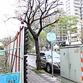 20130308竹北-020.JPG