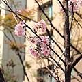 20150303竹北走春報導--054.JPG