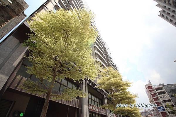 竹北近況20160822-0112.JPG