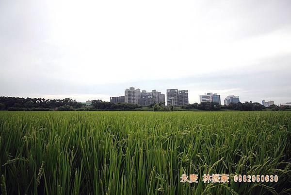 竹北近況縣三-026.JPG