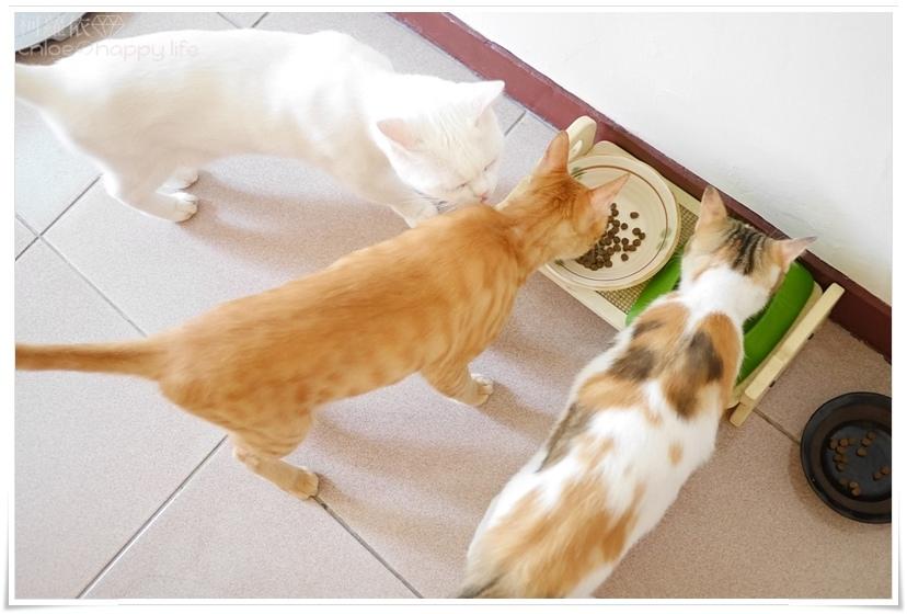 紐健士無穀鮭魚貓糧08.JPG