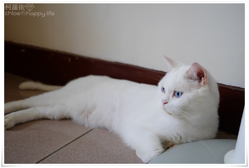 紐健士無穀鮭魚貓糧12.JPG