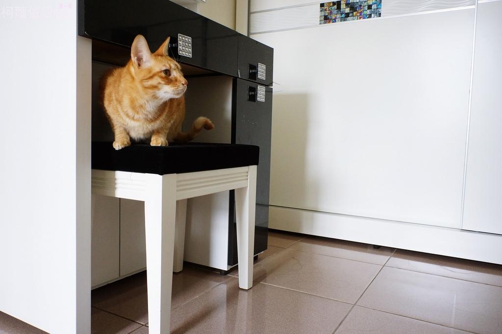 海爾 無線手持吸塵器-寵物專業配件組 (10合1)24.JPG