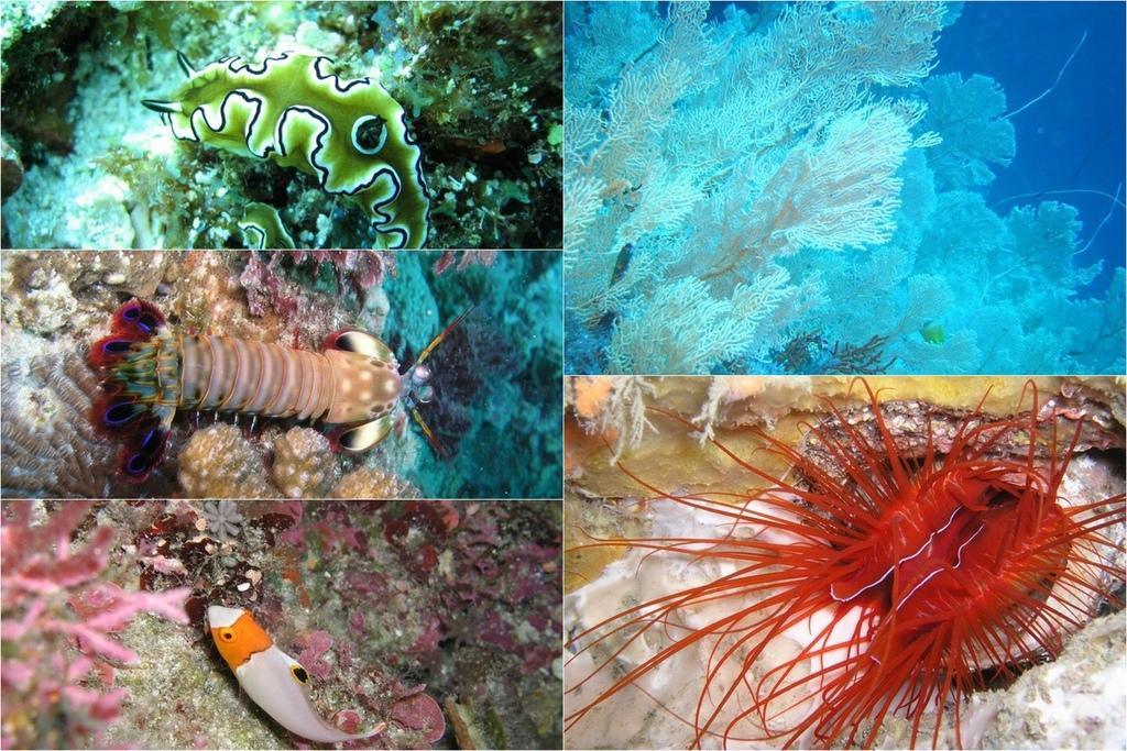 墾丁說走就走GO!二天一夜輕旅行 愛上潛水探索美麗的海洋 交給專業徜徉潛旅訓練中心52A.jpg