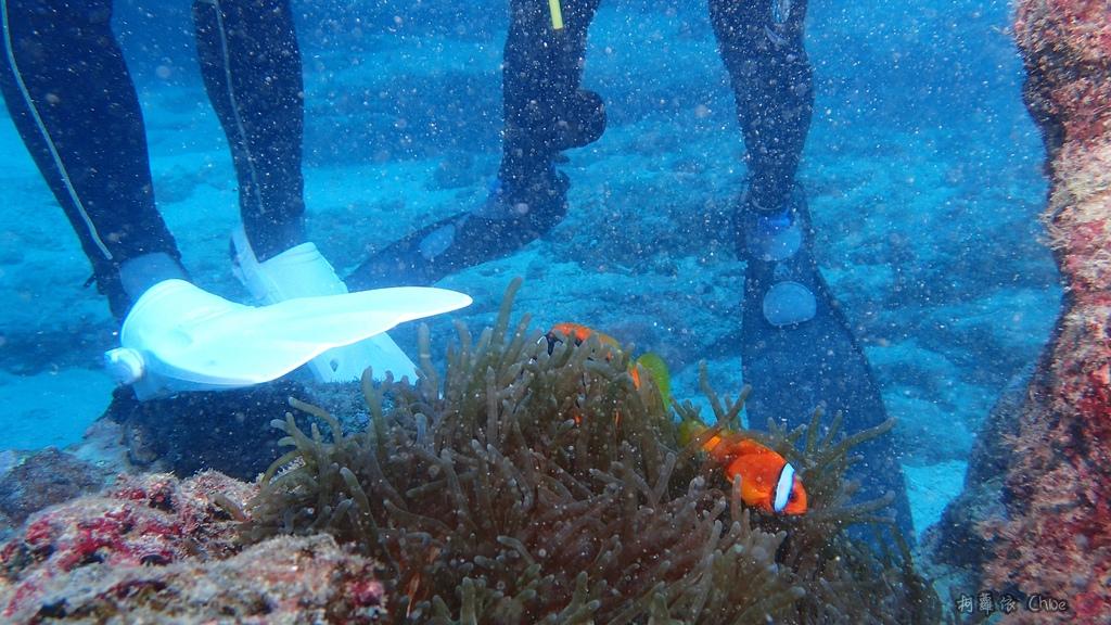 墾丁說走就走GO!二天一夜輕旅行 愛上潛水探索美麗的海洋 交給專業徜徉潛旅訓練中心49.JPG