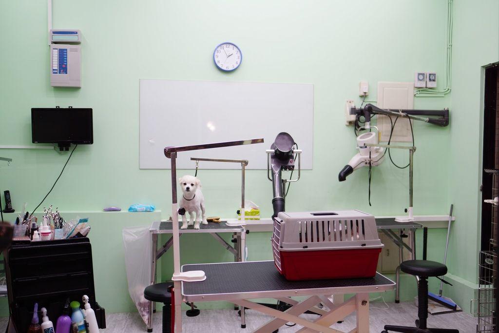 高雄 Cafedog寵物沙龍 寵物美容x網美咖啡廳複合店 優質服務和時尚空間 給毛小孩舒適SPA美容11.JPG