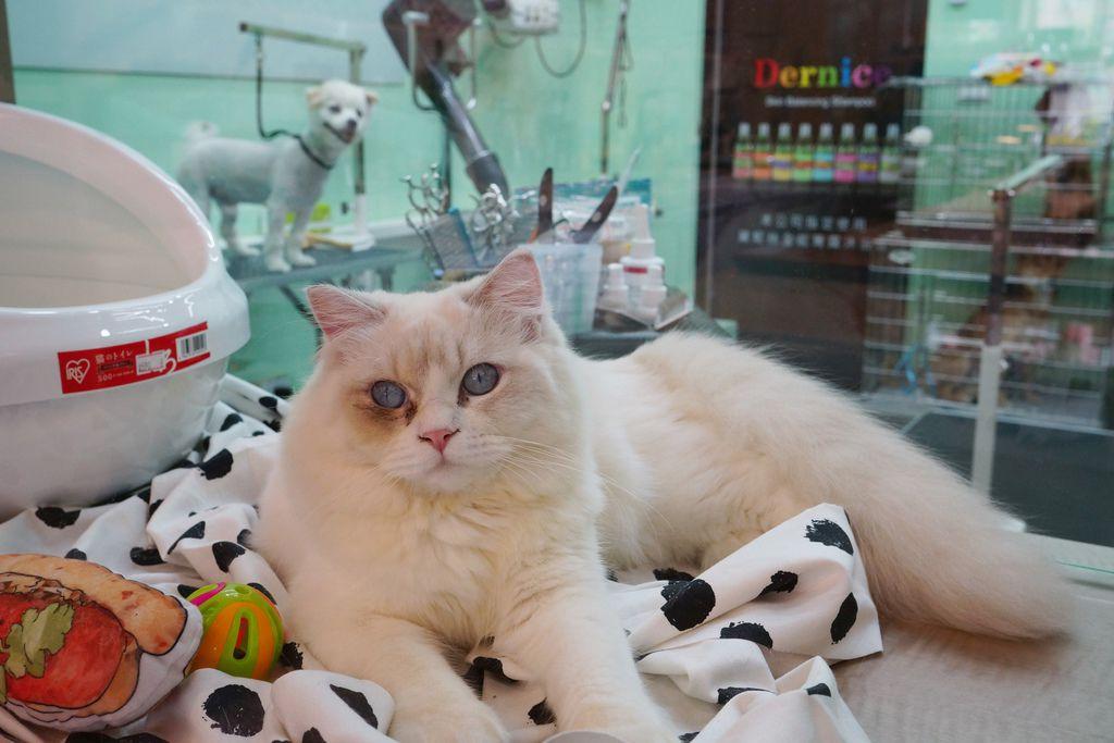 高雄 Cafedog寵物沙龍 寵物美容x網美咖啡廳複合店 優質服務和時尚空間 給毛小孩舒適SPA美容15.JPG