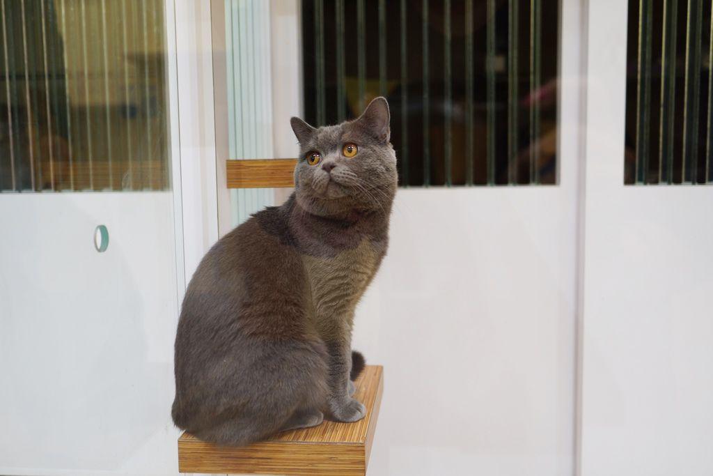 高雄 Cafedog寵物沙龍 寵物美容x網美咖啡廳複合店 優質服務和時尚空間 給毛小孩舒適SPA美容24.JPG