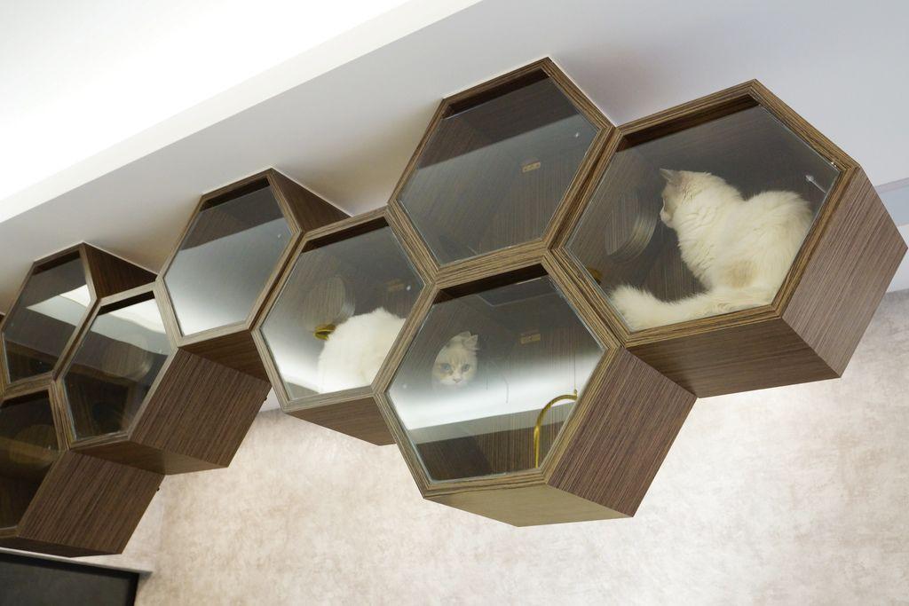 高雄 Cafedog寵物沙龍 寵物美容x網美咖啡廳複合店 優質服務和時尚空間 給毛小孩舒適SPA美容45.JPG
